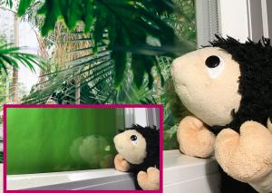 Foto vom Greenscreen-Effekt: Kuscheltierschaf schaut aus dem Fenster, draussen ist ein Foto von Urwald eingefügt. In einem Kästchen daneben sieht man das Schaf, wie es auf grünes Papier guckt.
